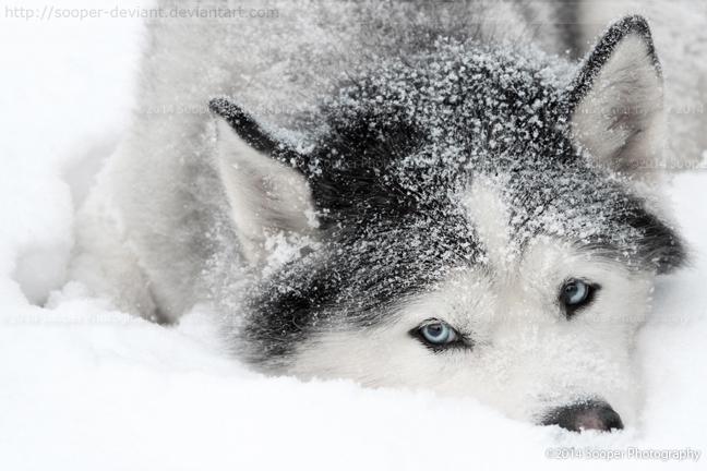 I Love Winter 1324 by Sooper-Deviant