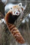 Firefox 3913P by Sooper-Deviant