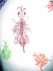 Pattern insects