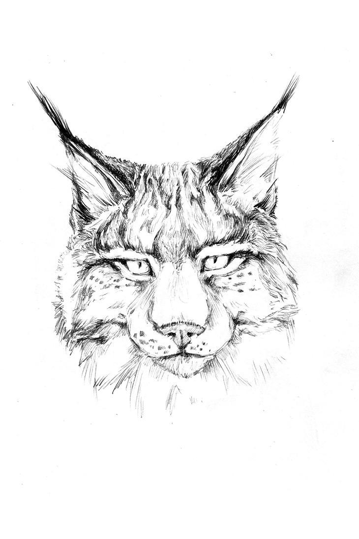 lynx by LittleTelli