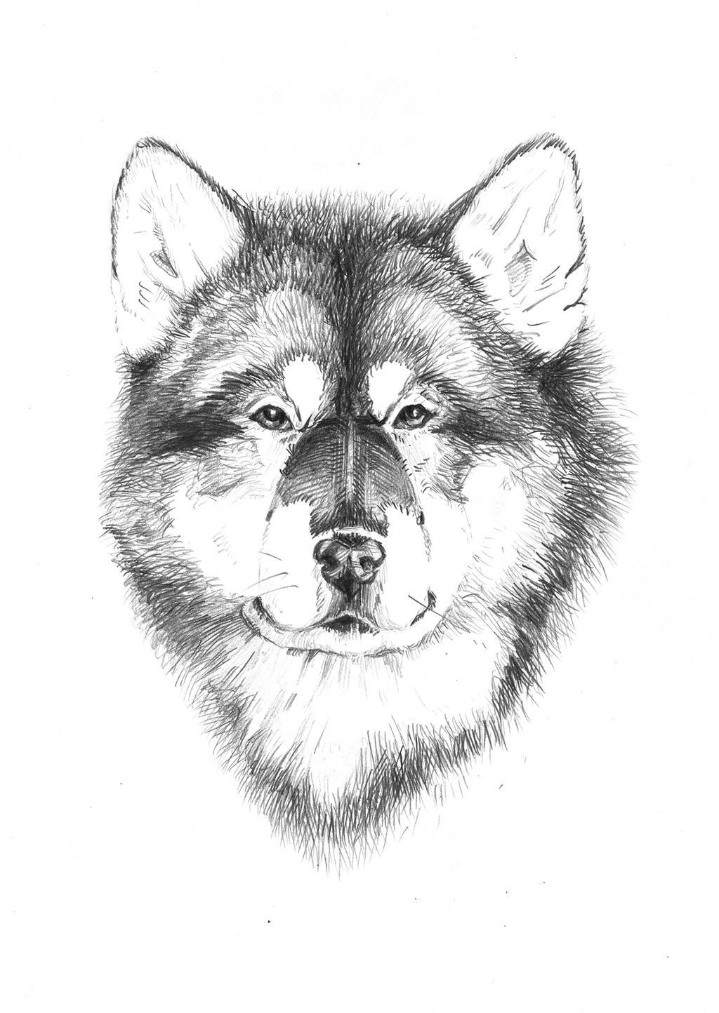 dog by LittleTelli