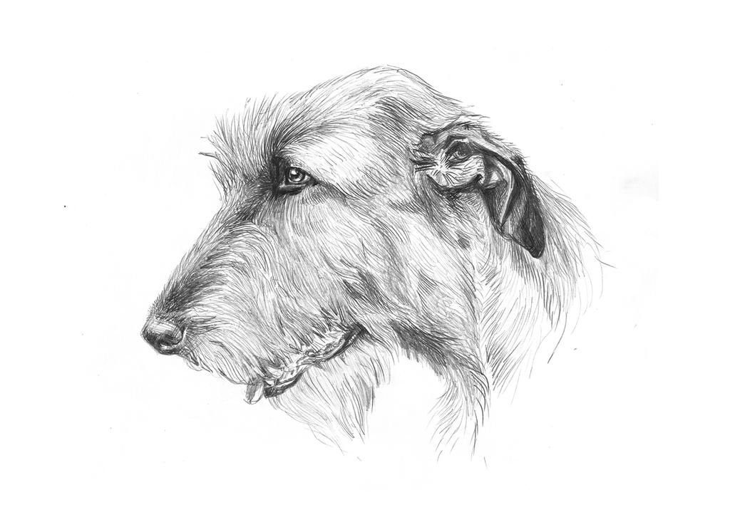 Irish Wolfhound by LittleTelli