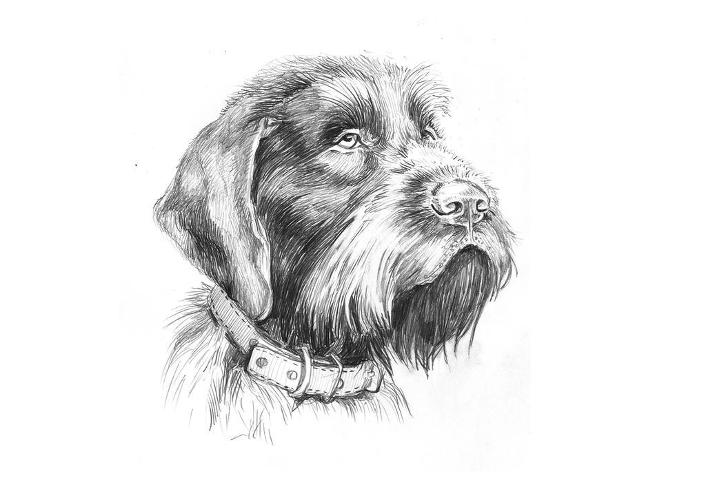 dog2 by LittleTelli