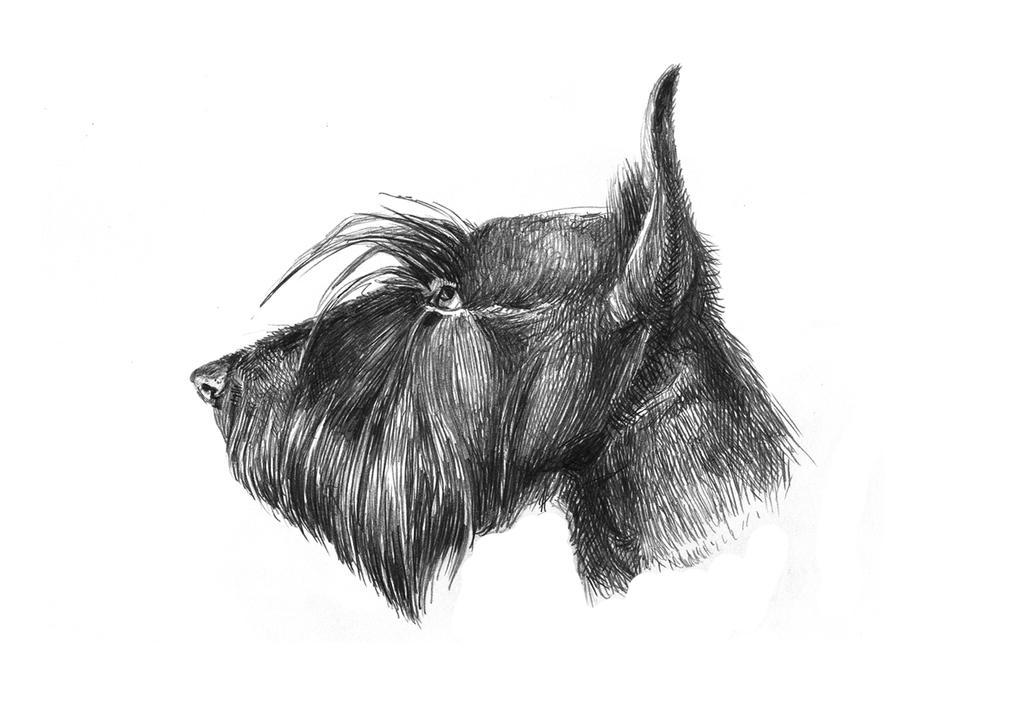 dog4 by LittleTelli