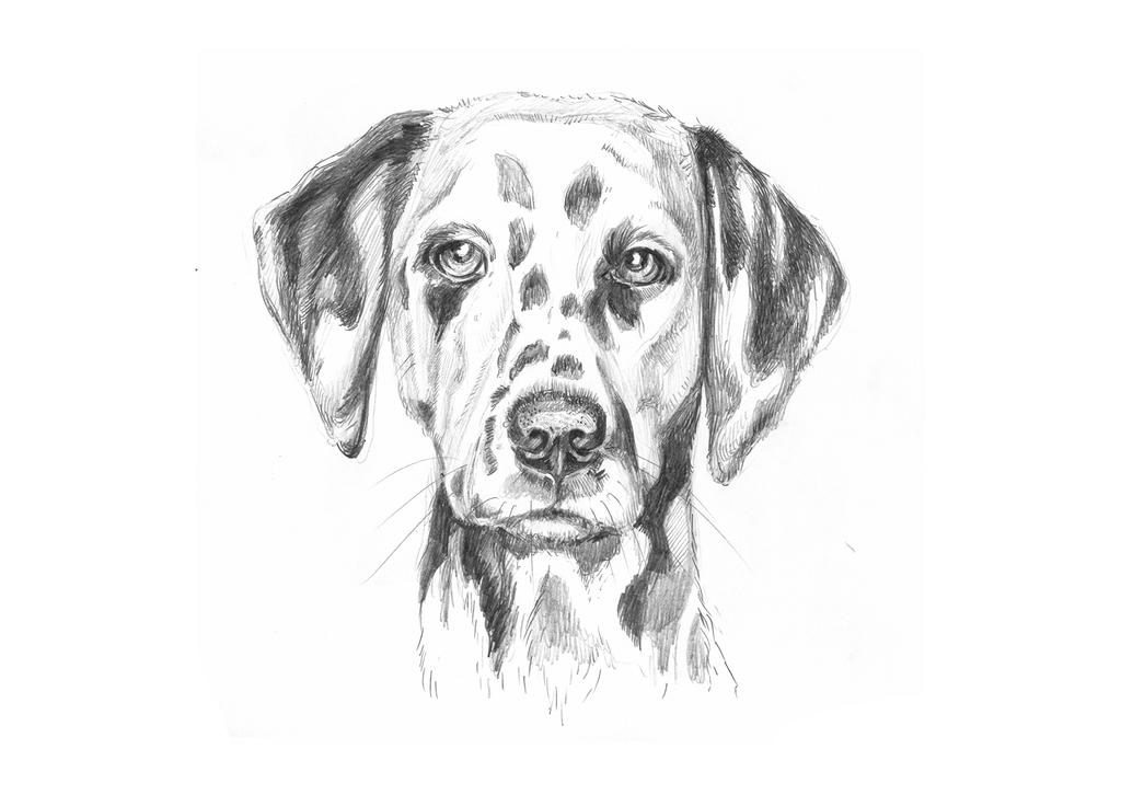 Dog5 by LittleTelli