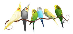 Parakeets and Cockatiels