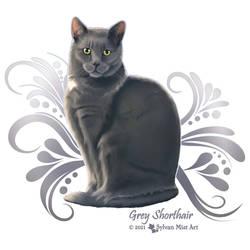 Grey Shorthair Cat