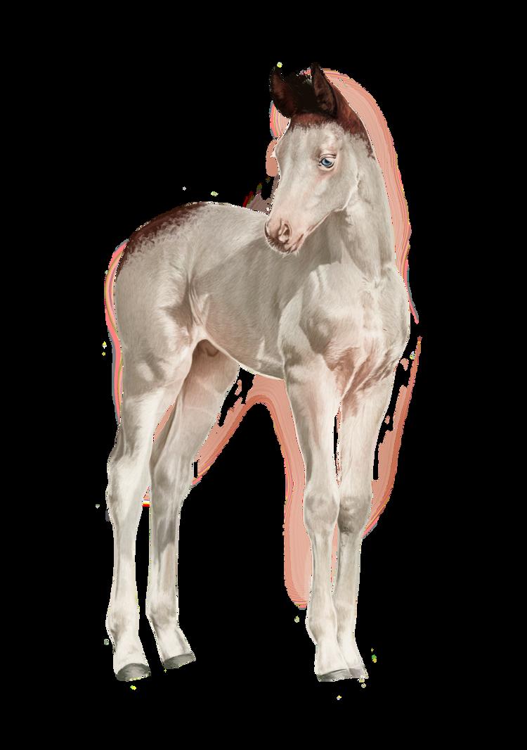Foal. by feverpaint