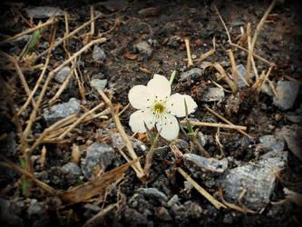 Fallen Flower by Hippiethecat124