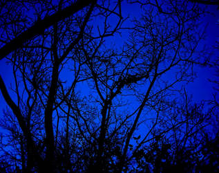 Branches at Night by Hippiethecat124