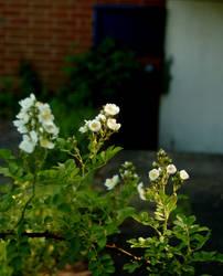 In Bloom by Hippiethecat124