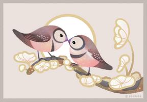 Owl finch by pikaole