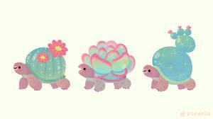 Cactus tortoise