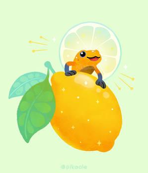 Golden poison lemon sherbet