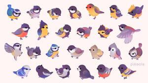 Tit (bird)