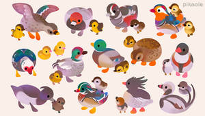 Duck 900