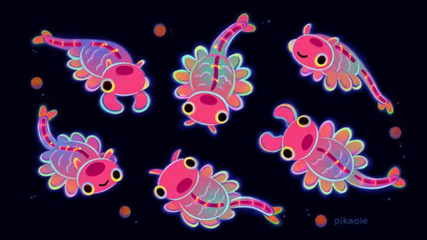 Fairy shrimp