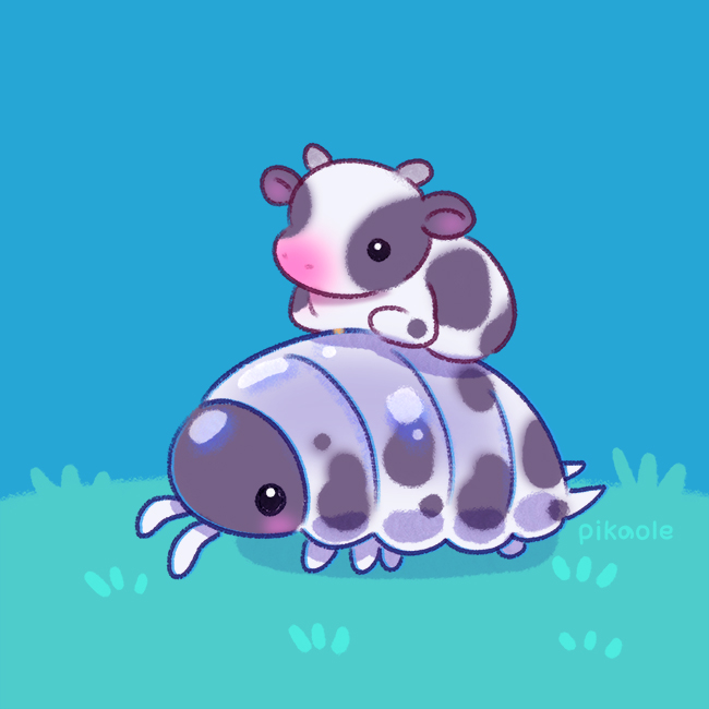 Dairy Cow isopods