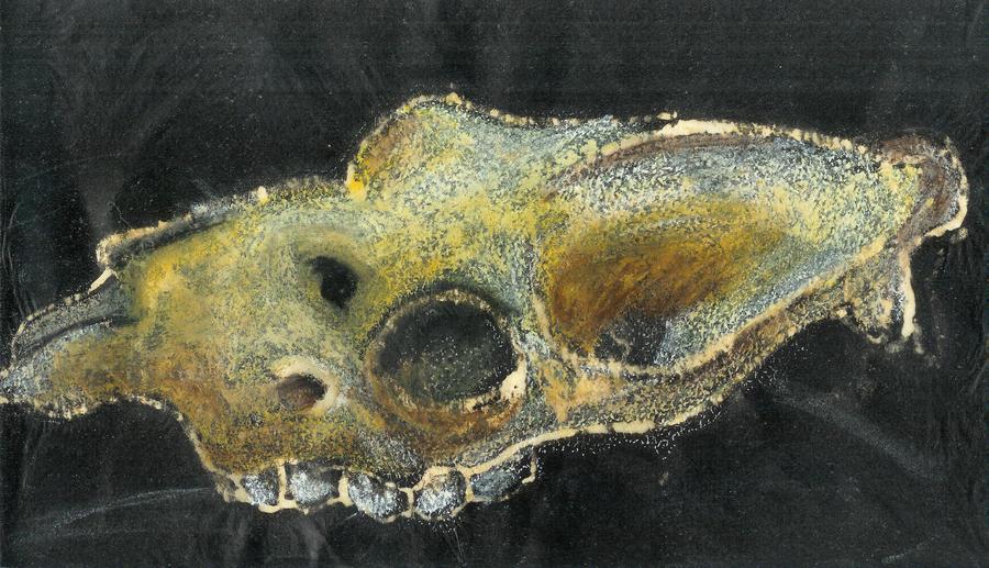 Skull and bleach