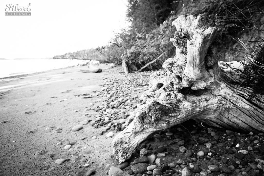 Beach Dragon by sweir17