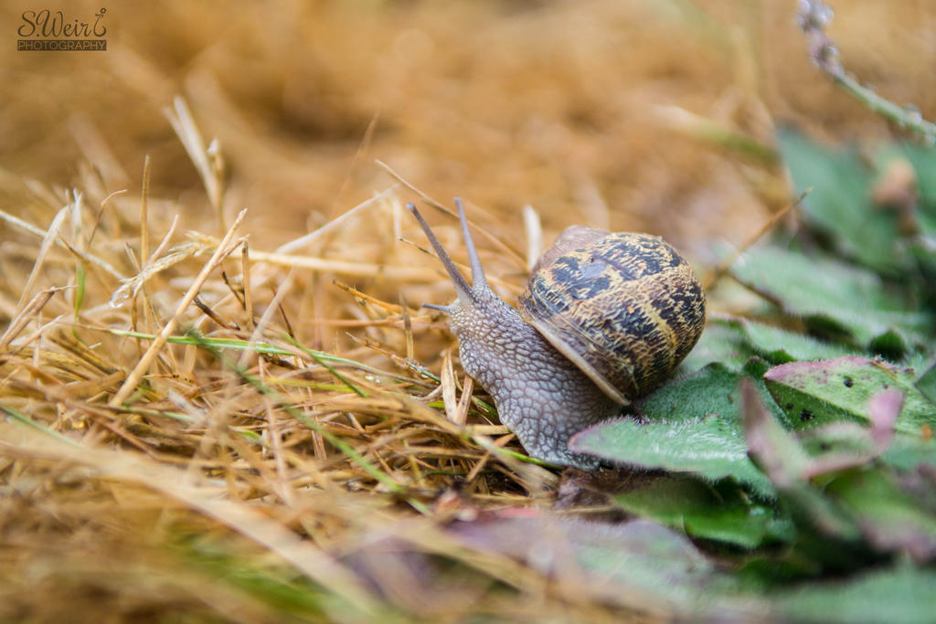 Snail and His Grand Adventure by sweir17
