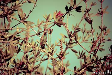 Colibri by necrodh
