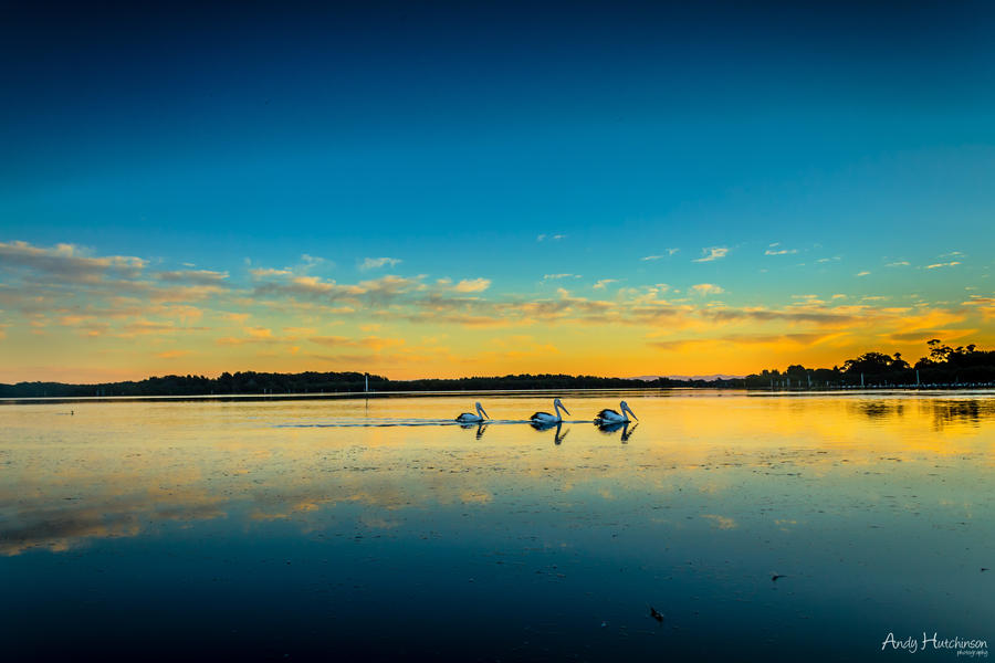 Pelicans Cubed by andyhutchinson