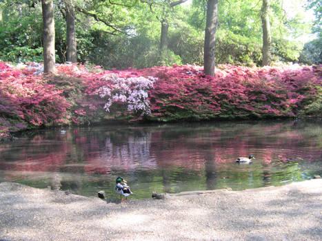 Pink Lake 03