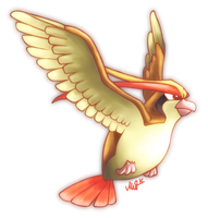 Pidgeot by Metterschlingel
