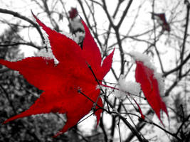 Red leaves 2 by musicismylife2010