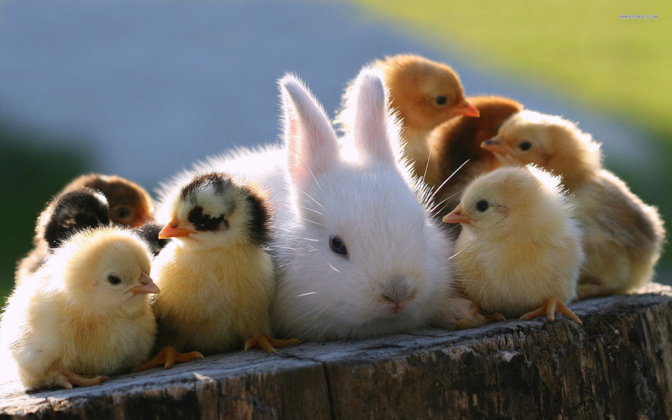 Cute Baby Animals Wallpapers  Android Apps on Google Play