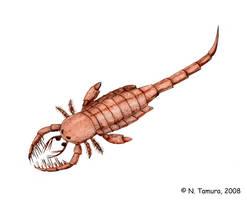 Mixopterus by NTamura by Eoscorpiidae
