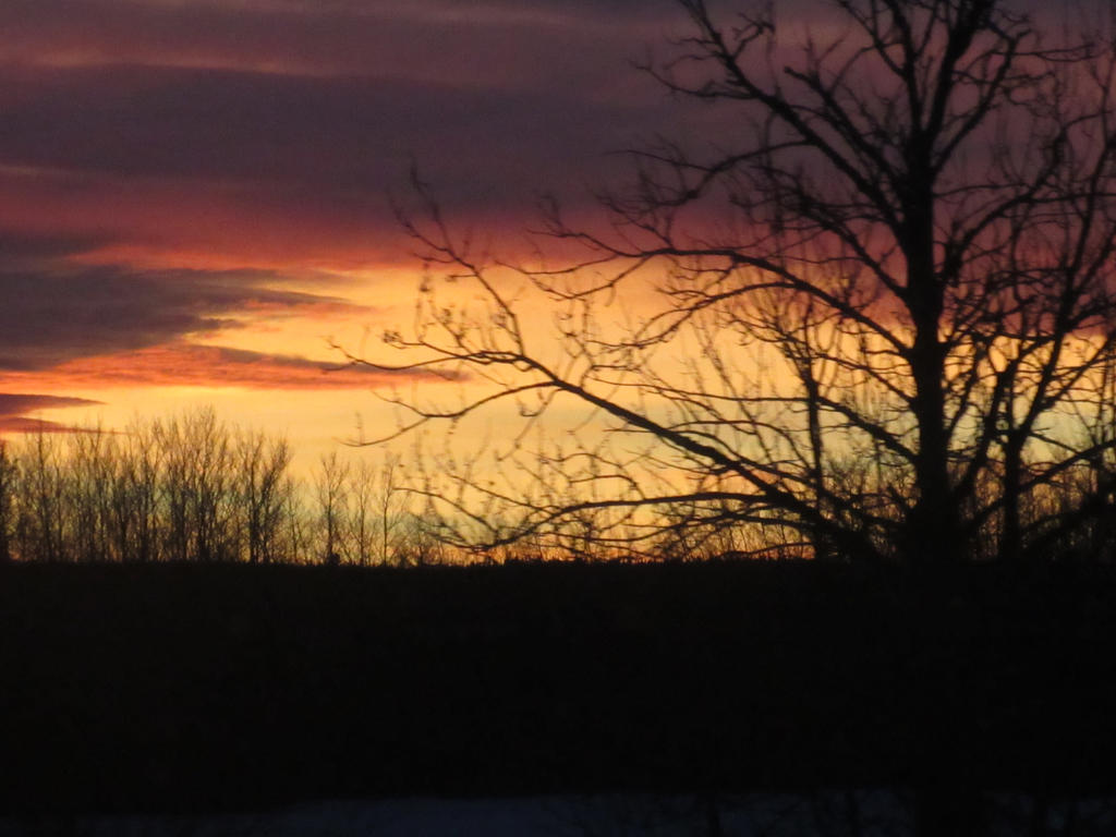 Sunset and a Tree by JoyJinn