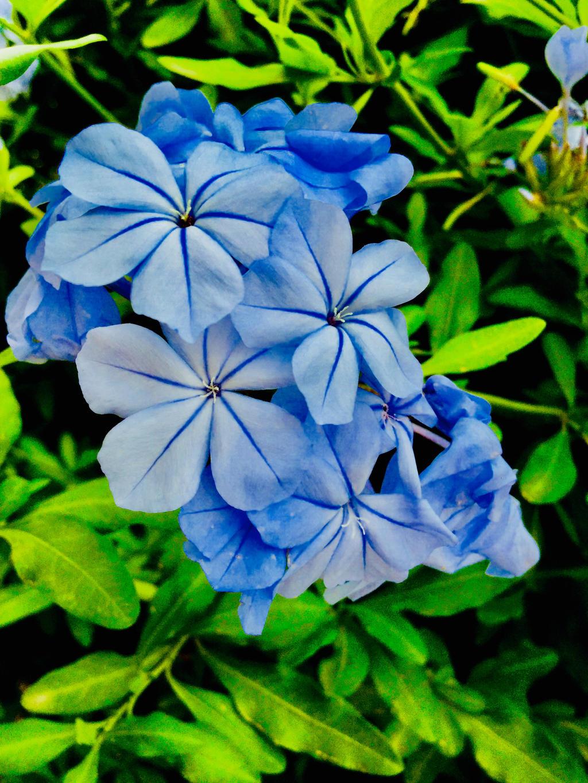 Mexican Blue by JoyJinn