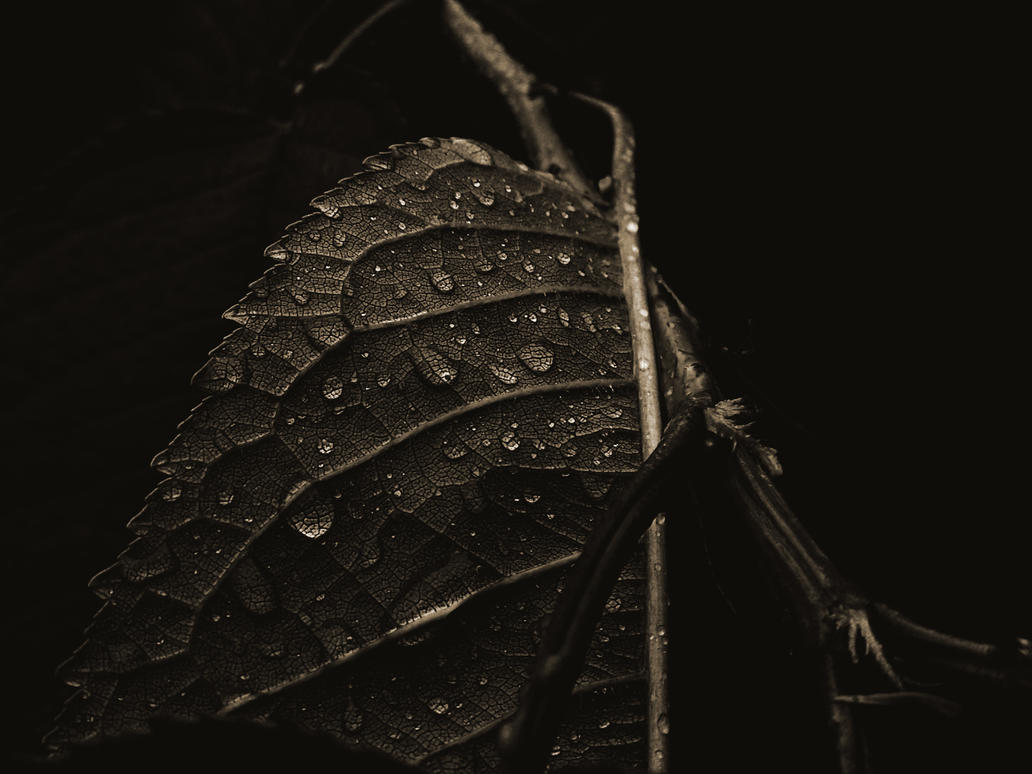 leaf by DeToxXGraff