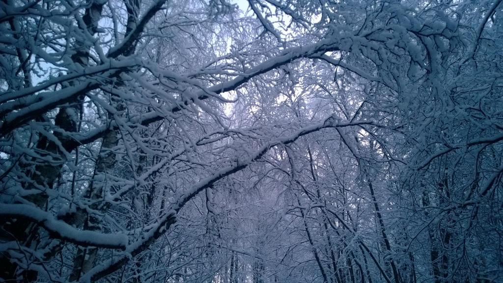 Snowness by Pamorina