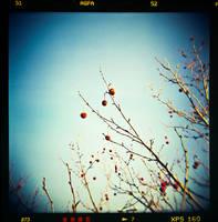 printemps by quadratiges
