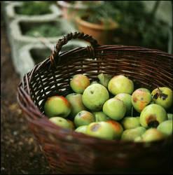 vert pomme by quadratiges