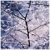 violet winter III by quadratiges