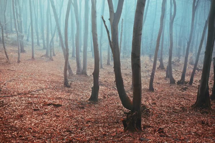 early morning fog by quadratiges