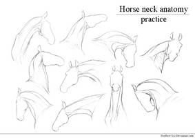 Horse Neck |anatomy practice| by HorRaw-X