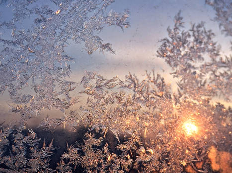 Morning winterfrost
