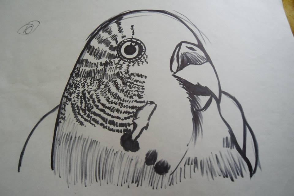 Perico Australiano Dibujo A Marcador By SandraTailsD On