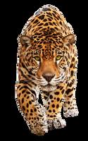 Jaguar by HZ-Designs