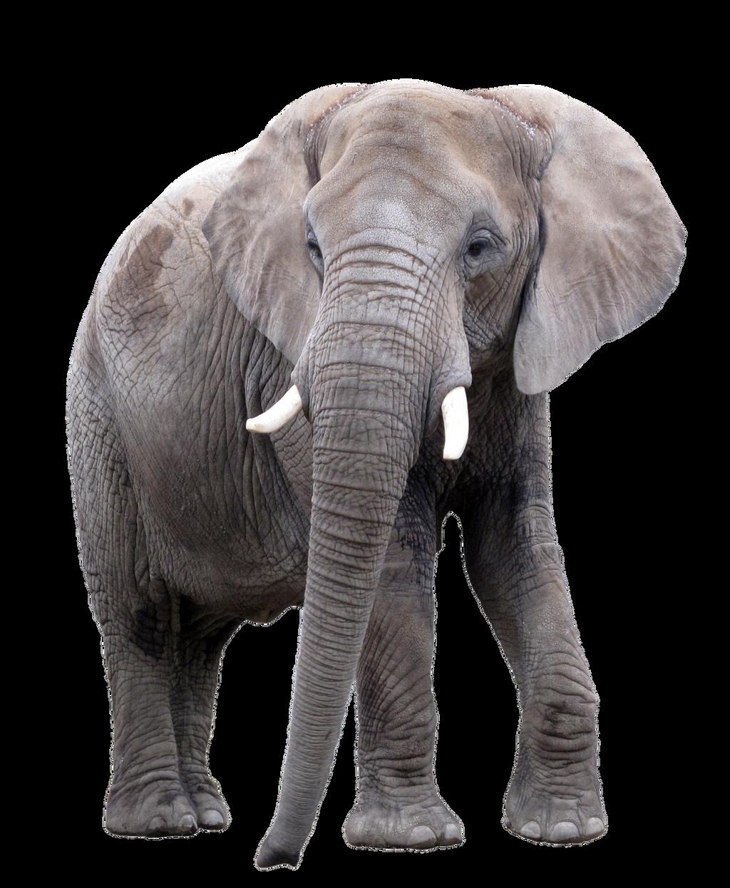 Elephant by HZ-Designs