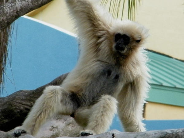 gibbon chat sites If you experience any trouble booking online, you can contact us via our live chat on the bottom right hand side of your screen  is flight of the gibbon insured.