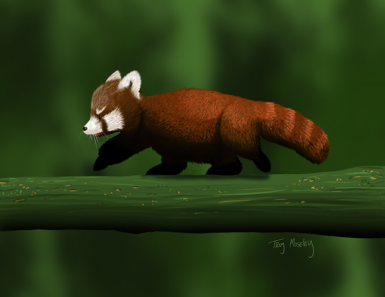 Baby Red Panda by pixel-putty