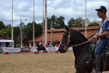 M Marchador stallion by Trz-125