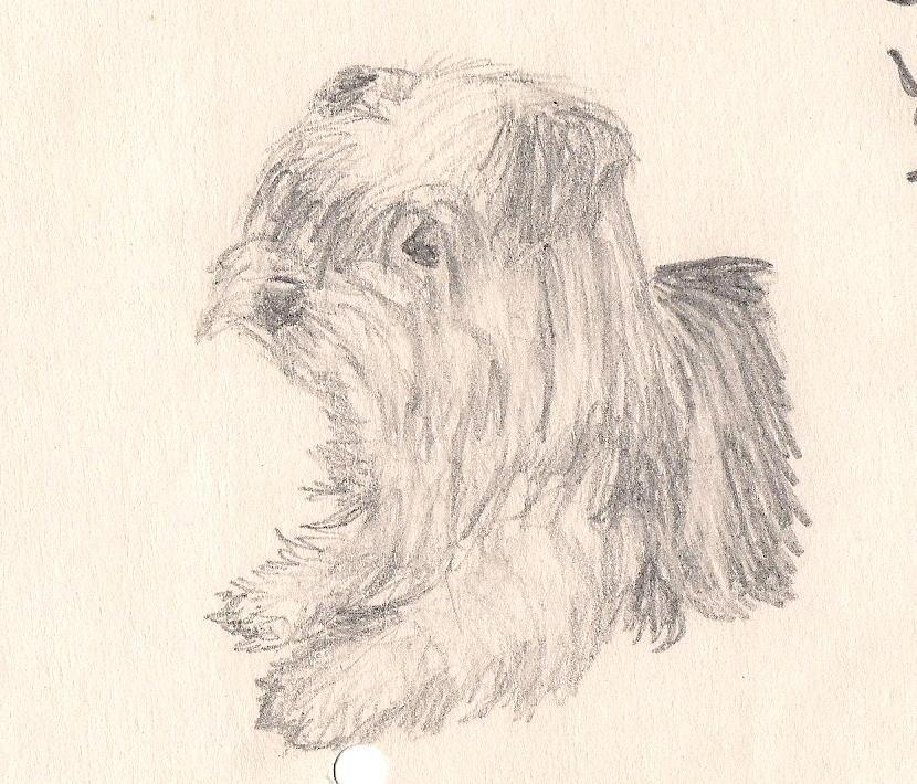 Mickey my dog yorkie by Rashirou