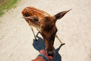 Deer by Hey-Bud-Joey